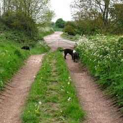 pircture of lane